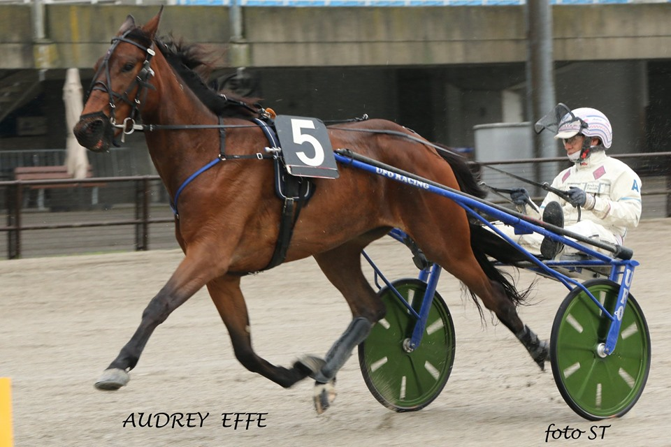 audrey-cacciare-filly