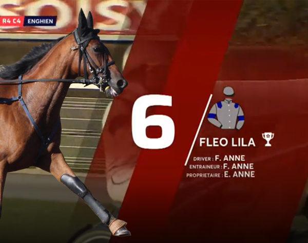 Fleo Lila