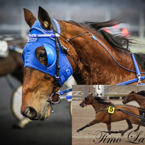 Timo Lane